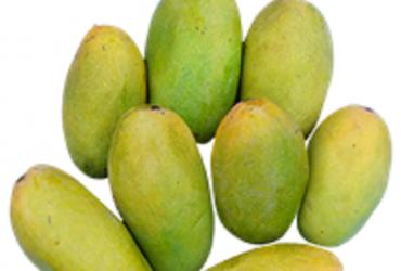 Fresh Dasheri Mango Aam – 1 Dozen
