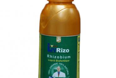 Liv Rizo – Rhizobium Bacteria