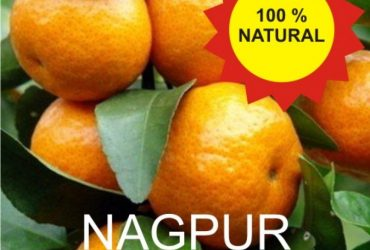 Nagpur Orange – Santra – 3 Kg