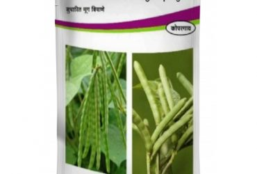 Shree Moong – Green Gram Seeds