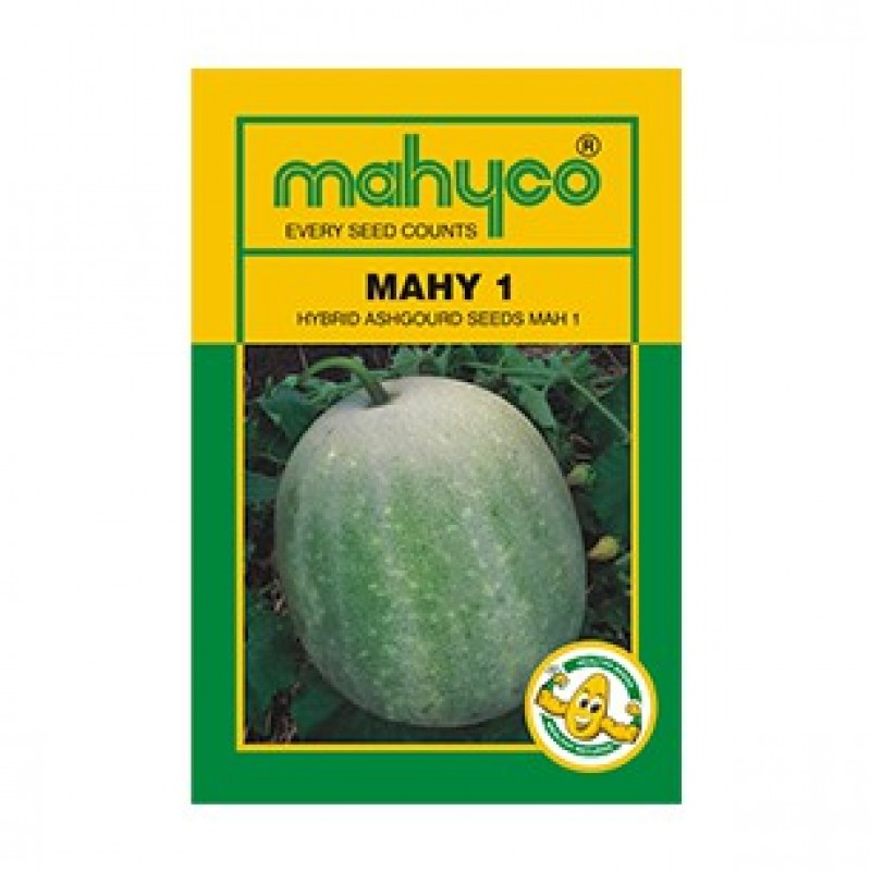 Mahyco PUMPKIN MPH-1 (50g) Vegetable Seeds