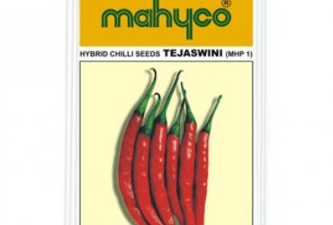 Mahyco MHP 1- TEJASWINI (10g) Chilly Vegetable Seeds