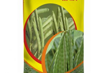 Shree Maruti Tur Seeds – ICP 8863